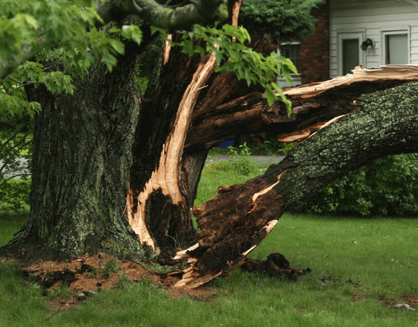 How do i know my tree is unsafe, unsafe tree, tree pruning, tree removal